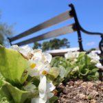 Hortikultura - parkovi